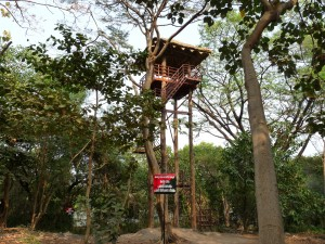 The view point: Wooden watchtower