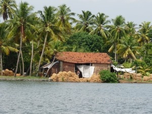 Coir making along Kayamkulam lake