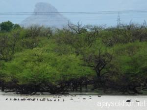 Tamil birdman Archives - Ajaysekher net