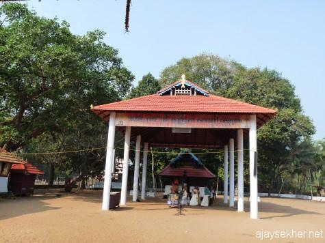 An ancient sacred grove-shrine Kurumba Kavu, Sobha Parambu, Tanur.  Rare wild trees are still left in the grove though vanishing.