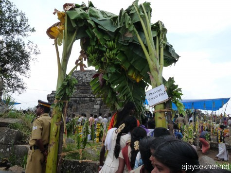 The decorated southern gateway to the Kottam.  Two big banana plants in fruition are used in typical south Indian style along with mango and Neem leaves and yellow marigolds.