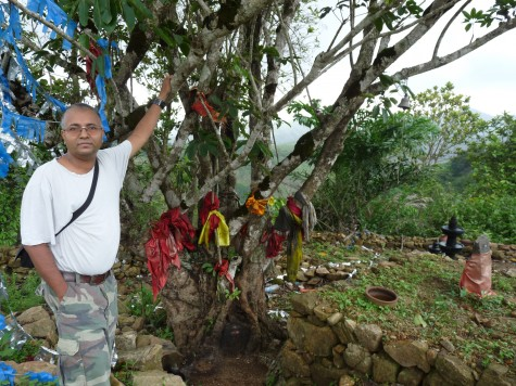 At the feet of the fig at Pallykanam.  The current Cholayal or Shola fig a close cousin of Shola growing rhododendron has covered the ancient granite idol into its organic embrace.  Photo: Anirudh Raman, early May 2013.