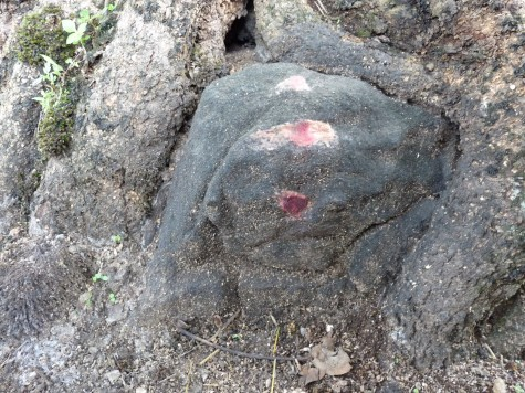 Part of the ancient granite idol covered by the fig roots at Pallykanam top.  Now it is termed as Siva and his phallus the Linga and Iduki Kshetra Samiti is going to build two huge concrete temples for Siva and Krishna on this eco-culturally sensitive zone.