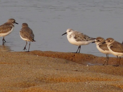 migrants at Chandragiri estuary a couple of years ago in Kasaragod.