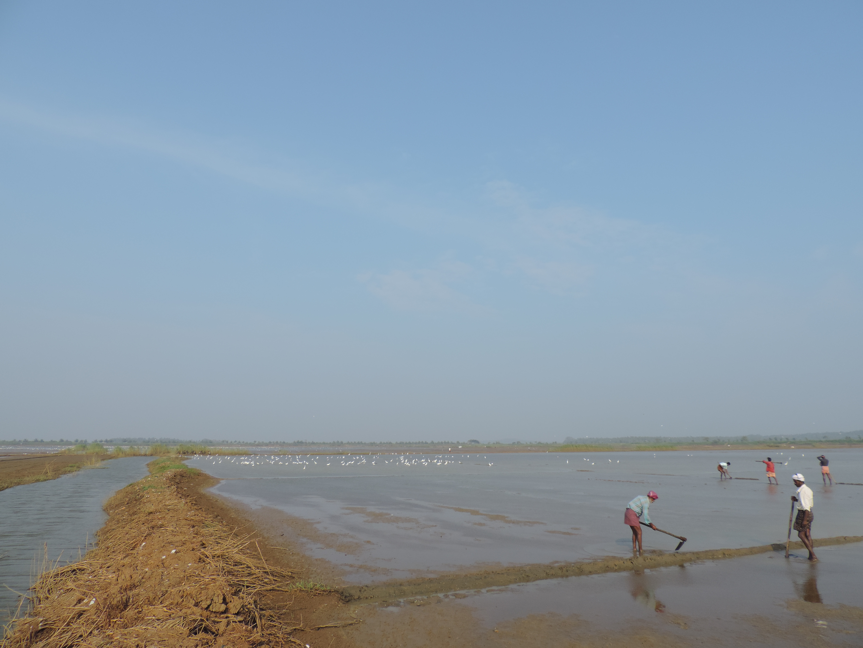 Adat Kol wetland on the morning of 10 Nov 2013.
