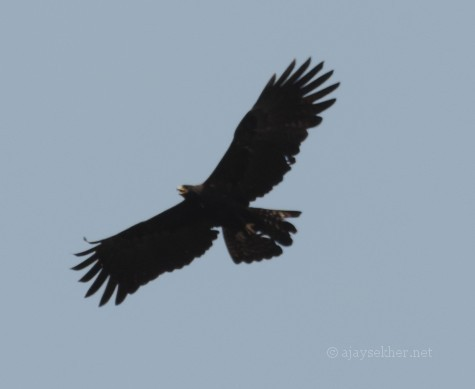 Black Eagle at Atirapally in the after noon of 10 Nov 2013. Below the waterfall. Taken astride on the bike.