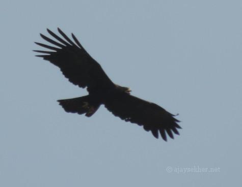 Black Eagle @ Atirapally